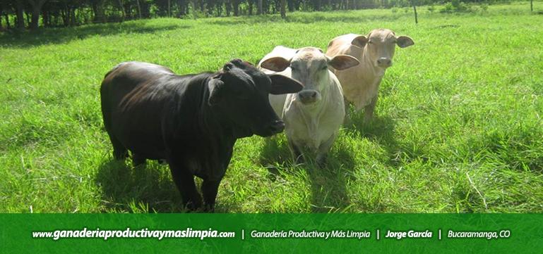 Ganadería Productiva y Más Limpia Jorge García Aprovechamiento de las Pasturas