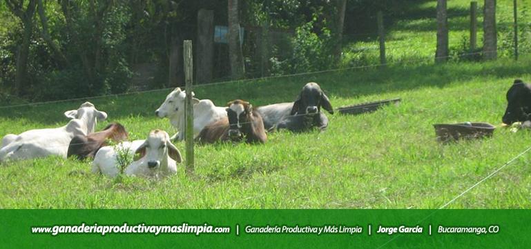 Ganadería Productiva y Más Limpia Jorge García Bienestar Animal