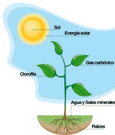 ganaderia-productiva-y-mas-limpia-jorge-pml-energia-3